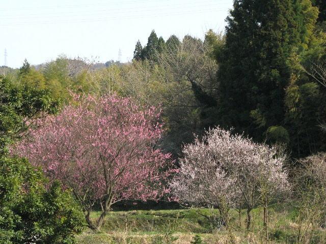 090321satoyamanoharu1