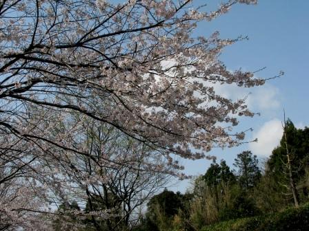 1348nukasatoyama1