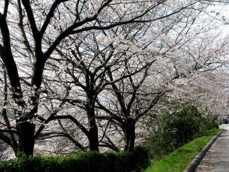1348nukasatoyama2